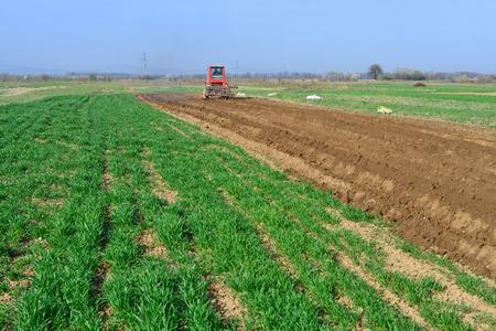 At planting potatoes Stock Photo