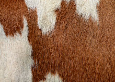 Fragment of a skin of a cow Stock Photo