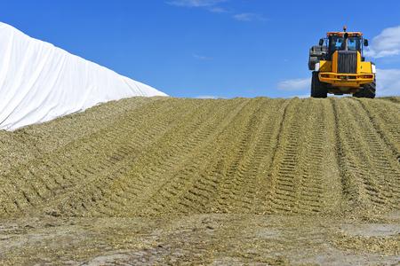 Ramming d'ensilage de maïs dans la tranchée de silo sur une ferme laitière Banque d'images - 87632759