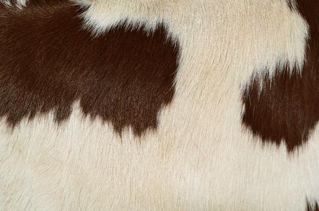 牛の皮膚の断片 写真素材