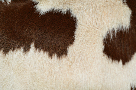 Fragment of a skin of a cow Imagens