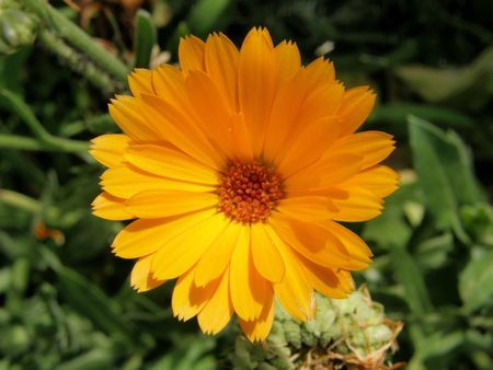 Natures definition of Orange