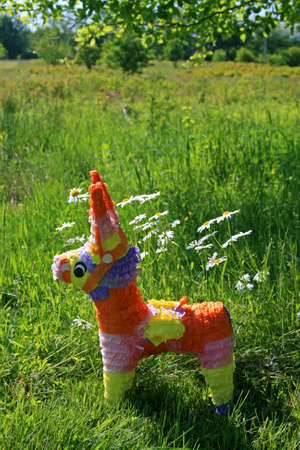 pinata: Pinata enjoying the Daisies Stock Photo