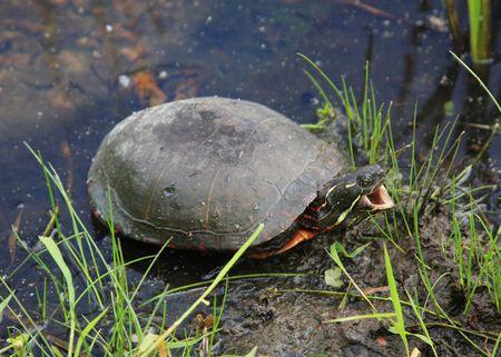 mornings: Even Turtles Hate Mornings