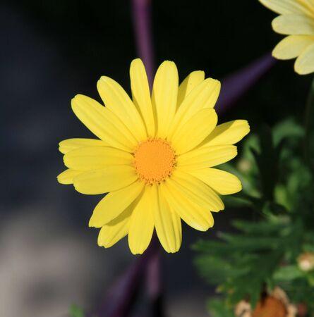 northeast ohio: Yellow Wildflower