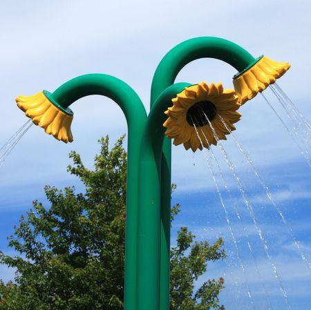 northeast ohio: Three Raining Sunflowers