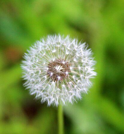 Potentiële Weed Stockfoto - 5046223