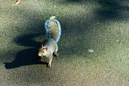 cute squirrel on the tarmac photo