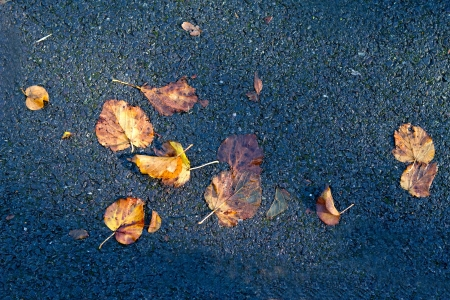Autumn leaves fallen down onto tarmac below Stock Photo - 15696563