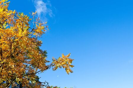 autumn tree with blue sky background Stock Photo - 15696543