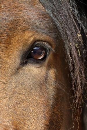 caballos negros: caballo marr�n en el interior estable Foto de archivo