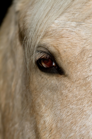 white horse close up in stable Stock Photo - 16444343
