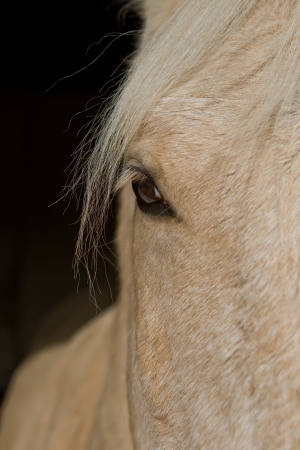 white horse close up in stable photo