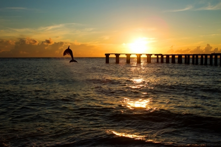 dolphin jumping out of the sea in florida