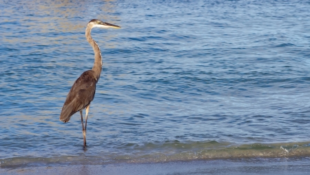 heron on a sunny beach in florida photo