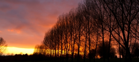 row of trees at sunset photo