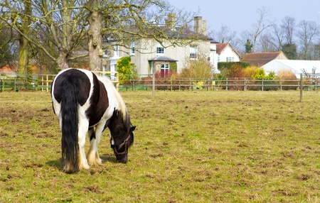 horse standing in the paddock outside a county home