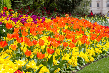 a variety of bright colourful spring flowers blooming in St James Park Stock Photo