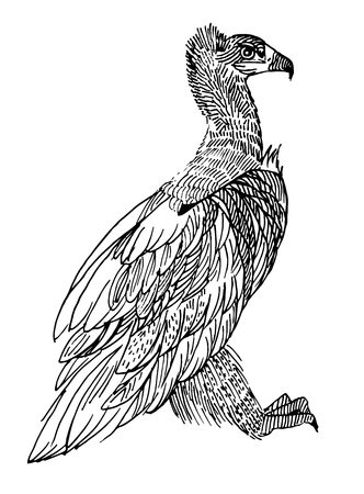 Black vulture. rare animals, vector illustration