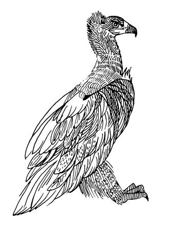 karkas: Zwarte gier. Zeldzame dieren, vectorillustratie Stock Illustratie