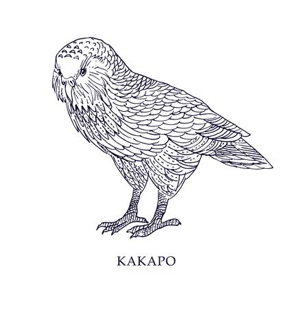 Strigops habroptila - Kakapo, uil papegaai.