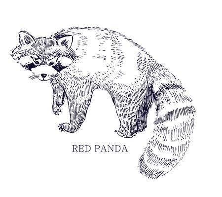 レッサー パンダ、希少動物、保...