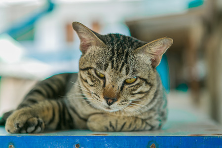 sweetie: Cute catat relaxes on the wooden table.