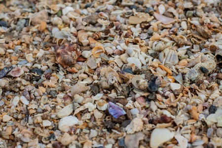 Sea sand texture made of shell and stone pieces. Seamless texture photo