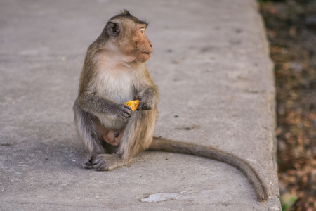 conglomeration: Monkey eats raw banana on the ground.