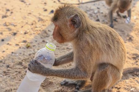 Monkey drinks water from a plasic bottle
