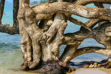 falling tide: Tree with many trunk sin the sea