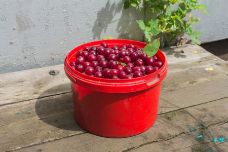 Benna rossa perlustrato ciliegie rurali su un tavolo di legno.