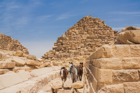 necropolis: Three horses and pyramids of Giza in Egypt