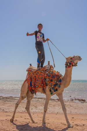 arabic boy: Sharm-El-Sheykh, Egypt - May 25, 2010 :: Arabic boy with tomb up stands on a camel on the beach.
