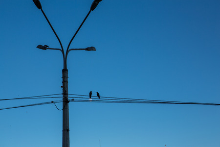 entanglement: Street lamp and two birds on wires Stock Photo