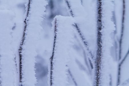 Close up frozen winter bushes covered with ice crystals. Stock Photo