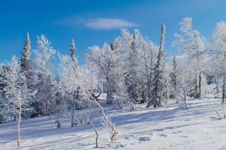 hoarfrost: Beautiful winter landscape with snow covered trees Stock Photo