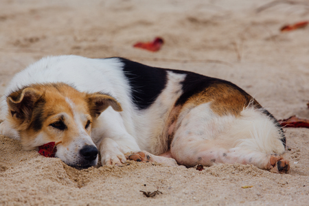 Cute dog relaxing on the sandy beach Foto de archivo