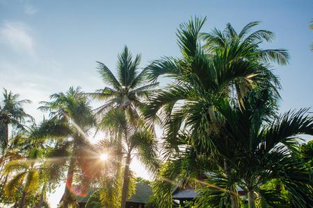 Coconut palm trees on the tropical beach Stok Fotoğraf