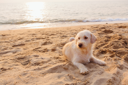 Cute dog relaxing on the sandy beach during sunset Stock Photo