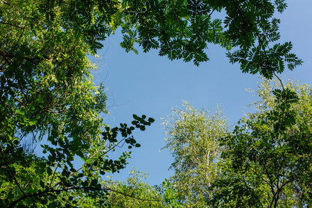 Different green leaves on the tree on the blue sky background on sunny day. Copy space