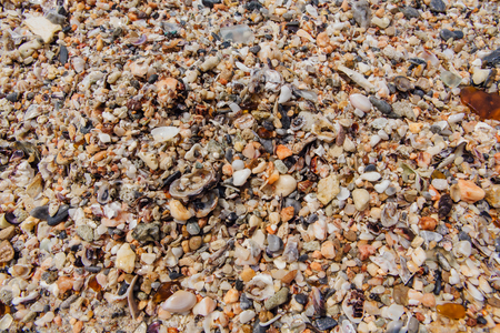 Sea sand texture made of shell and stone pieces. Seamless texture Stock Photo