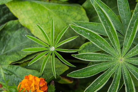 Flower plant with green leaves with transparent drops of dew on a grass background Stock Photo