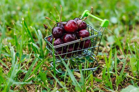 Mini shoppingcart full of fresh red ripe cherries on the green grass