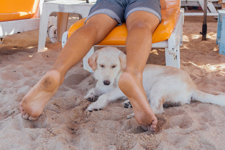 Cute white dog relaxing on sandy beach between the legs of a man laying on the sunbed