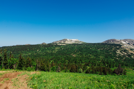 Summer mountain landscape with clear blue sky, green forest and mountain with snow on horizon.