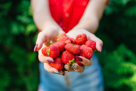 Woman holding fresh juicy red strawberries in palms