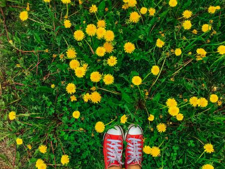 Womans feet in red sneakers shoes standing on the grass with growing yellow dandelions