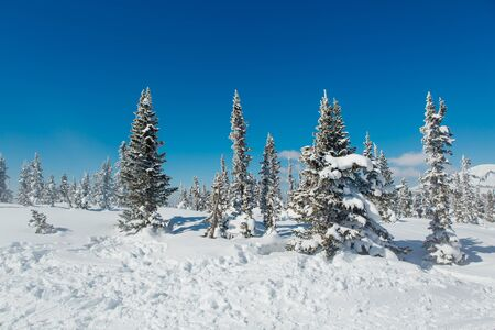 Beautiful winter landscape. Snow covered forest and mountain. 写真素材