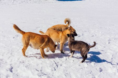Four cute dogs on snow in a bright sunny day Reklamní fotografie